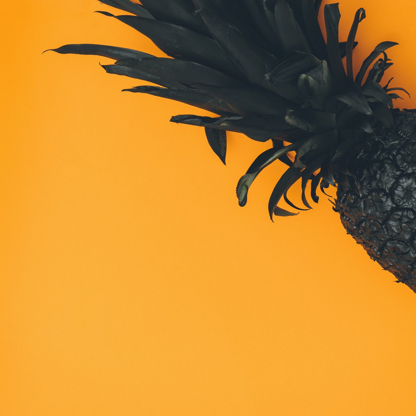 pineapple-supply-co-378132-unsplash